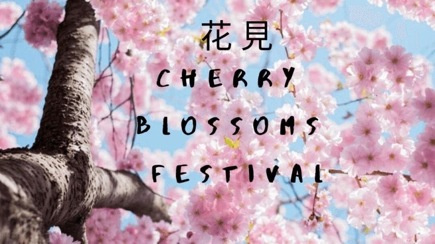 Cherry Blossoms Festival | FAIR Inc