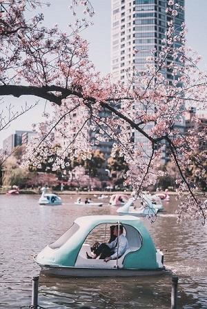Go Hanami With Tranquility Cherry Blossom | FAIR Inc