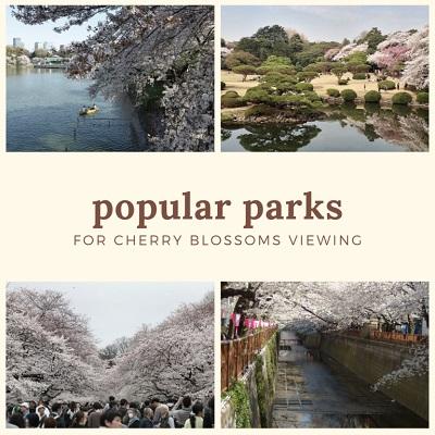 Popular Parks For Hanami Cherry Blossom Viewing| FAIR Inc