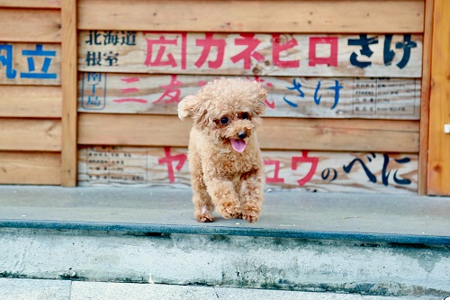 Japanese Dog Names | FAIR Inc