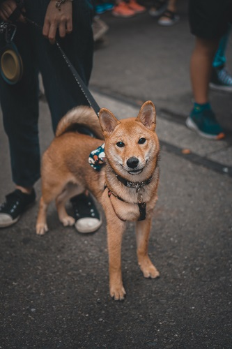 Japanese Dog Names Hachiko | FAIR Inc